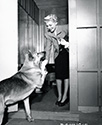 Just another day at home for Rita Hayworth.  Ned Scott captures her in a warm moment with her German shepherd as the two exchange high fives at Rita's doorway.  Rita was filming Lady From Shanghai at the time, and this photograph along with others of her around the house supported her role in the film.
